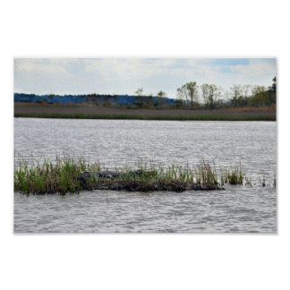 Alligator at Bear Island, South Carolina Poster
