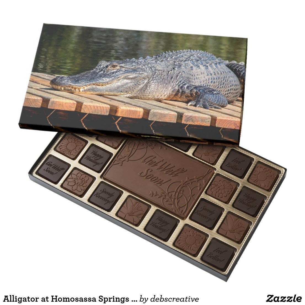Alligator at Homosassa Springs Wildlife State Park Assorted Chocolates