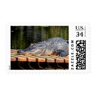 Alligator at Homosassa Springs Wildlife State Park Postage