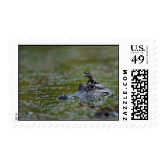 alligator &  baby stamp
