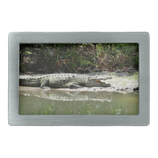 Alligator Belt Buckle