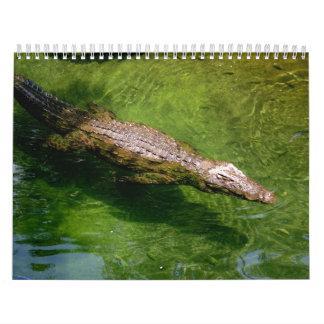Alligator calendar