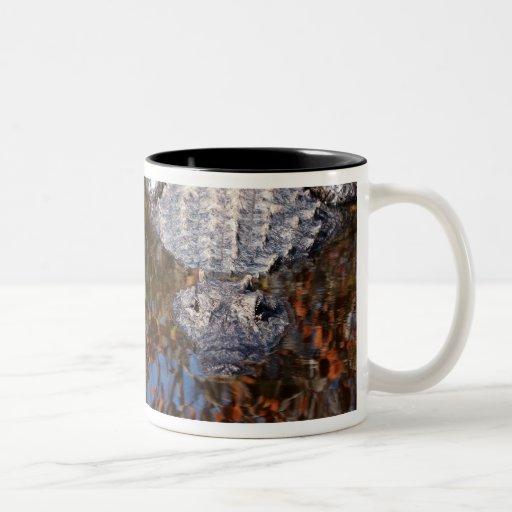 Alligator - Careful! - See Both Sides Two-Tone Coffee Mug