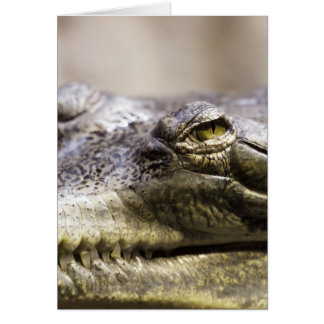 Alligator closeup photo card
