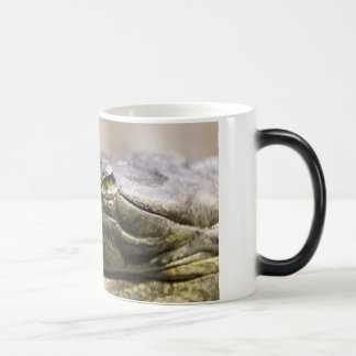 Alligator closeup photo magic mug