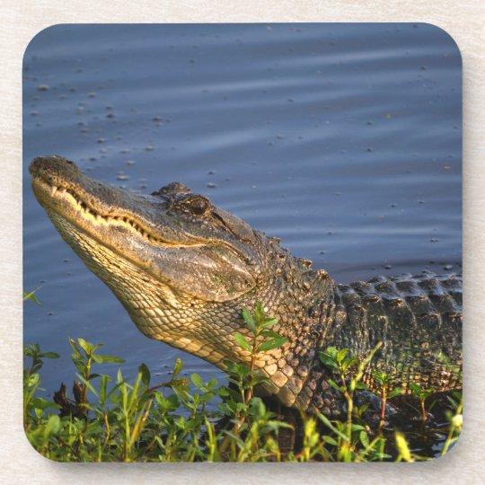 Alligator Creeping Up Beverage Coaster