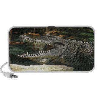 Alligator Doodle Speaker
