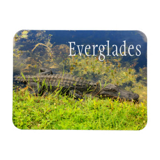 Alligator, Everglades National Park, Florida Rectangular Photo Magnet