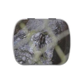 alligator eye through fence reptile animal gator candy tin