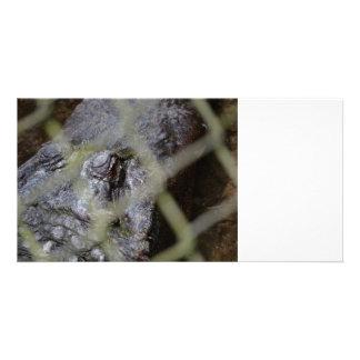 alligator eye through fence reptile animal gator photo card