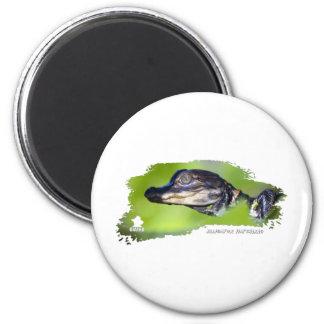 Alligator Hatchling 01 2 Inch Round Magnet