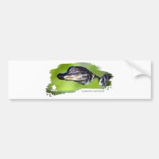 Alligator Hatchling 01 Car Bumper Sticker