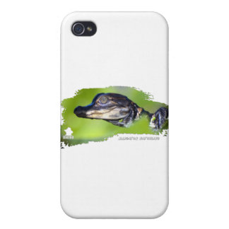 Alligator Hatchling 01 iPhone 4/4S Covers