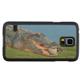 Alligator, Hazardous Lie on Golf Course Carved® Maple Galaxy S5 Slim Case