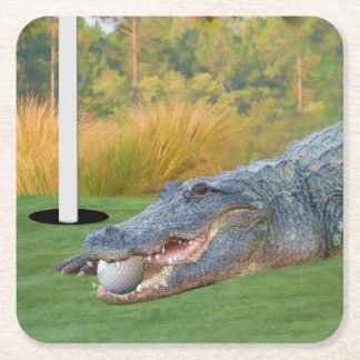 Alligator, Hazardous Lie on Golf Course Square Paper Coaster