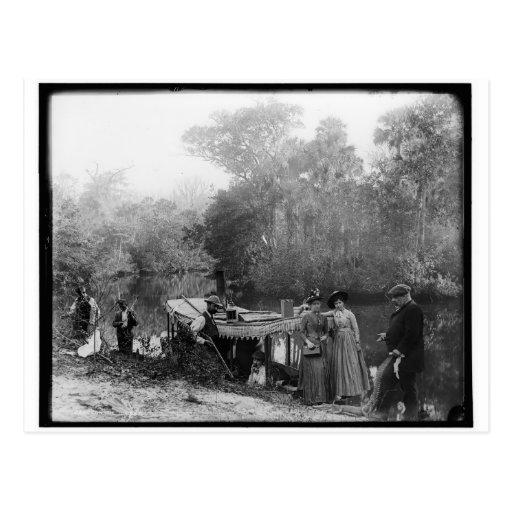 Alligator Hunting, Tomoka River, Florida 1880-1897 Postcard