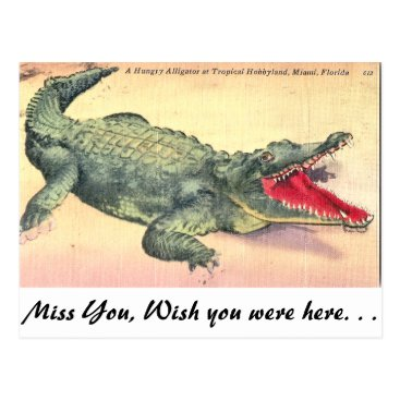 LUVLINENS Alligator in Florida Postcard