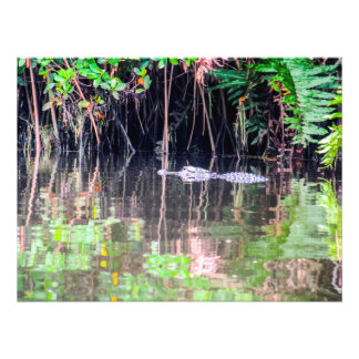 Alligator in the River Photo Print
