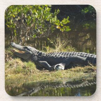 Alligator in the Sun Coaster