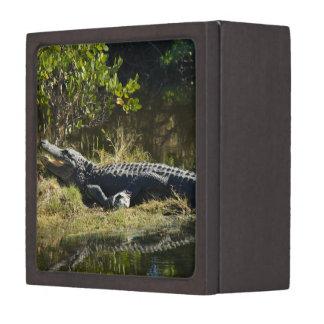 Alligator in the Sun Premium Trinket Boxes
