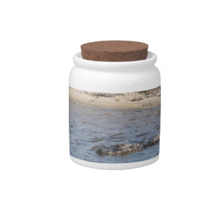 Alligator in the Water Candy Jars