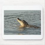 Alligator in the water. mousepad