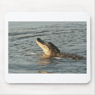 Alligator in the water mousepad