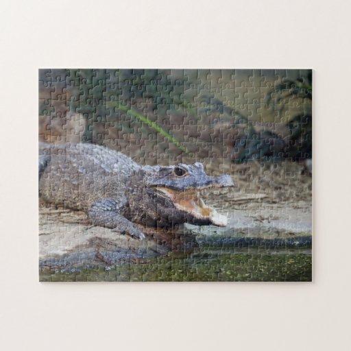 alligator jigsaw puzzles