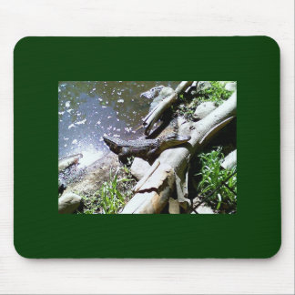 alligator mouse pad