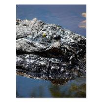 Alligator of North Carolina Postcard