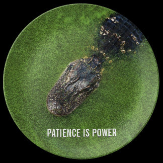 Alligator • Patience is Power • Florida Nature Porcelain Plate
