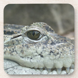 Alligator Photo Beverage Coaster