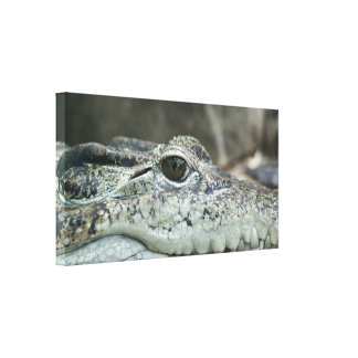 Alligator Photo Canvas Print