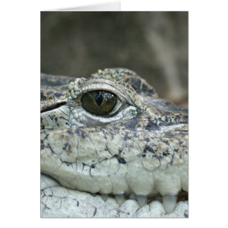 Alligator Photo Card