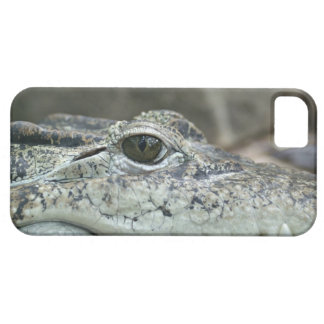 Alligator Photo iPhone SE/5/5s Case
