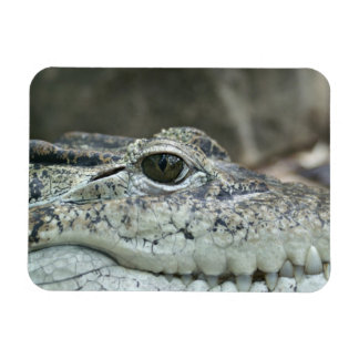 Alligator Photo Magnet