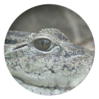 Alligator Photo Melamine Plate