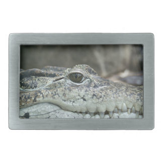 Alligator Photo Rectangular Belt Buckle