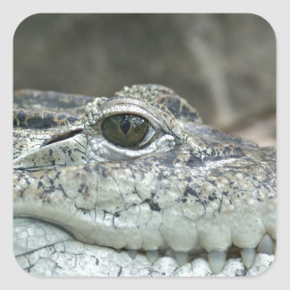 Alligator Photo Square Sticker