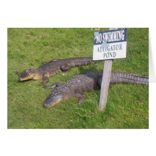 Alligator Pond Card