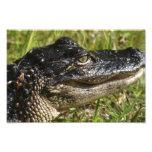 Alligator Portrait II. Art Photo