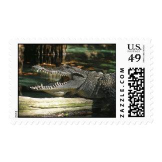 Alligator Postage Stamp