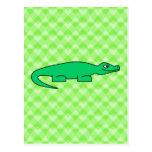 Alligator. Postcard