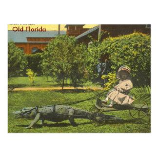 ALLIGATOR POWER, Old Florida Postcards