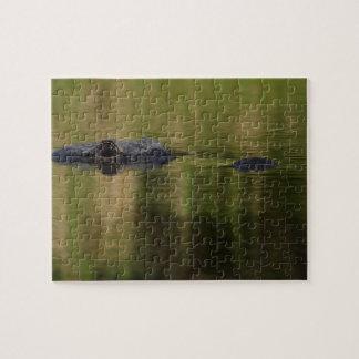 alligator puzzle