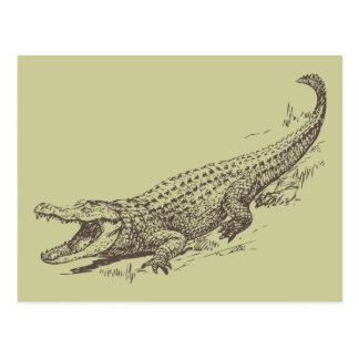 Alligator Realistic Illustration Postcard