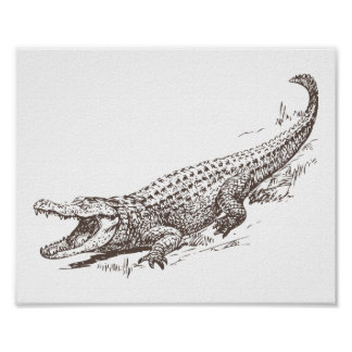Alligator Realistic Illustration Poster