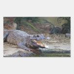 alligator rectangular sticker