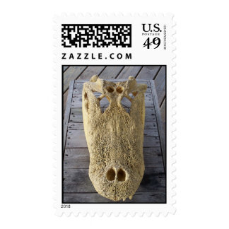 Alligator skull on wooden deck, gator head postage stamp