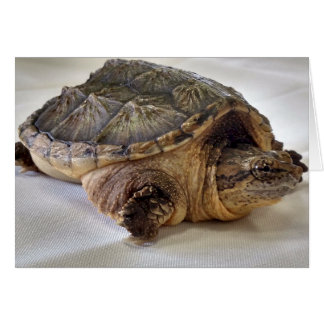 Alligator Snapping Turtle Card